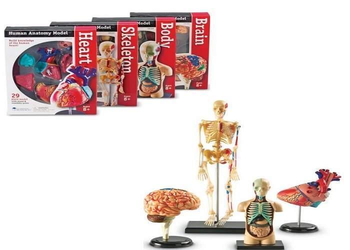 Развивающая игрушка «Анатомия человека» (Мозг, Сердце, Тело, Скелет. 132 элемента)